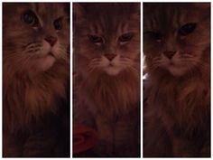愛猫さくら姫|SHOOP+FACTORY(シュープ・ファクトリー)@オーナーブログ-143ページ目