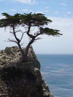 The Lone Cypress, scenic drive, Monterey