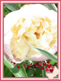 Viel Spaß mit den Bildern.Sie finden auf dieser Seite lizenzfreie, weil von mir selbst fotografierte und verschönerte Bilder, kostenlos zum Download. http://kostenlose-fotos-bilder-sprueche-legakulie.de/ #beautiful #wow #nice #nature #picture #flowerpicture