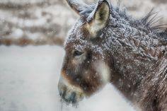 The Greatest Working Animal My donkey Lulu