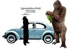 Gigantopithecus Blacki Size | Palaeos, la historia de la Vida en la Tierra: Titanes ... Dinosaur Era, Dinosaur Fossils, Prehistoric World, Prehistoric Creatures, Dinosaurs Extinction, Giant Animals, Extinct Animals, Majestic Animals, Mundo Animal