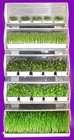 Automatic Sprouters