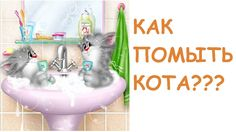 Как помыть кота? ТЕОРИЯ