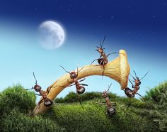 Over its 150 million years of history, ants have developed plenty of environmentally friendly ways to sustain life and survival strategies