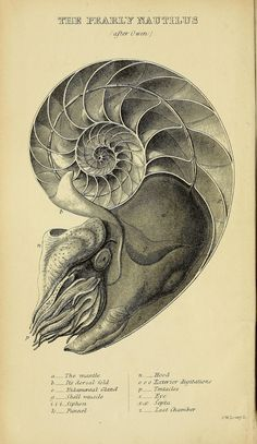 A manual of the Mollusca :. London :Virtue & Co.,1868.. biodiversitylibrary.org/page/32571360