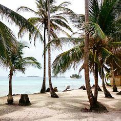 palm tree beaches