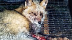 Petition · Anne Gobi: Tell the fashion industry: Massachusetts does not support using real fur for keychains · Change.org