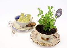 Pflanz-Set:+Eine+Tasse+Tee+bitte!+Motiv:+B47+von+Parzelle43+auf+DaWanda.com