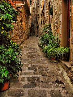 bluepueblo:    Narrow Street, Liguria, Italy  photo via heartbeatz