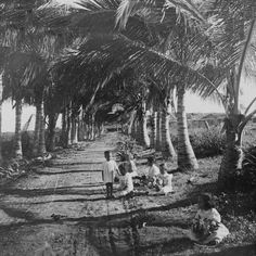 kids playing on the road leading to Old San Juan Puerto 1900
