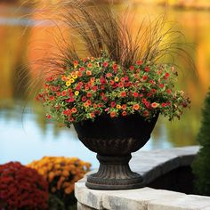 Freshen your container plantings with flowers and grasses. Keep in mind that the days are shorter and choose plants that require less sun. Pick up more tips from Proven Winners, including recipes for stunning containers. || @provenwinners