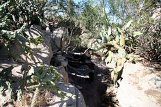With cooler weather, Living Desert is a fun place to visit right now! http://carlsbadnewmexico.com/place/living-desert-zoo-gardens-state-park/