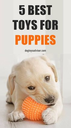 Looking for the best chew toys for puppies? Save your possessions by providing some of the best puppy teething toys for your pup to chew on instead. Diy Chew Toys For Dogs, Best Toys For Puppies, Diy Puppy Toys, Puppy Chew Toys, Big Puppies, Cute Animals Puppies, Cockapoo Puppies, Best Teething Toys, Puppy Teething Toys