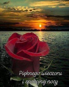 Joelle, Rose, Flowers, Plants, Pictures, Polish, Photos, Pink, Plant