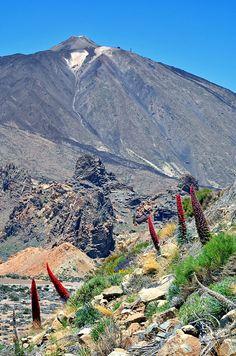 Tajinaste Rojo en el Teide, Tenerife, Islas Canarias, Spain.
