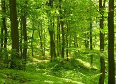 Forest in Spring Vægplakat