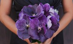 Stemz, Bridal bouquet of  Vanda Orchids