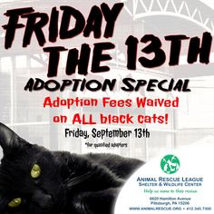 Friday the 13th Adoption special...adopt a beautiful black cat!