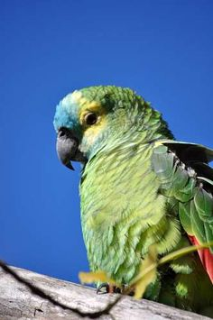 Imagenes Gratis, Loro, Un Animal, Loro, Lorito, Verde, Ave, Aves Amazons, Ecuador, Parrot, Creatures, Kawaii, Animals, Parrots, Wild Animals, Old Things