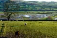 Das Upper Airedale um Cononley, North Yorkshire im Frühling.