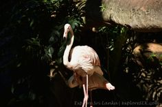 Large Herons at Entrance of Dehiwala Zoo
