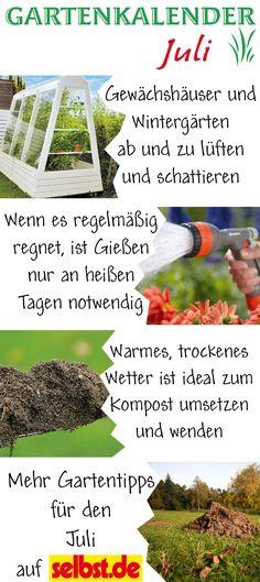 Hainbuche Hainbuchenhecke Säulenhainbuche Carpinus betulus - tipps pflege pflanzen wintergarten