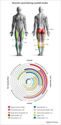 Power-Pedal-Muscles-BlogReady (700×1428)