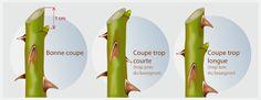 Ideas Mini Tree Garden Plants For 2019