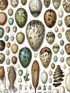 Dream Dictionary - Egg Dream Symbolism