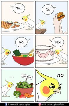 Cute Funny Babies, Cute Funny Animals, Cute Baby Animals, Funny Birds, Cute Birds, Funny Cartoons, Funny Memes, Parrot Pet, Funny Parrots