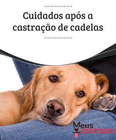 Castração de cadelas: veja os cuidados a serem tomados Ainda que a castração de cadelas seja uma intervenção cirurgia segura algumas complicações podem acontecer Neste artigo, nós diremos como evitar. #Saúde