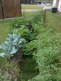 4 the Love of Family: - Very good blog on straw bale gardening