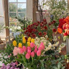 Spring Aesthetic, Nature Aesthetic, Flower Aesthetic, Japanese Aesthetic, Flowers Nature, My Flower, Beautiful Flowers, Wild Flowers, Sogetsu Ikebana