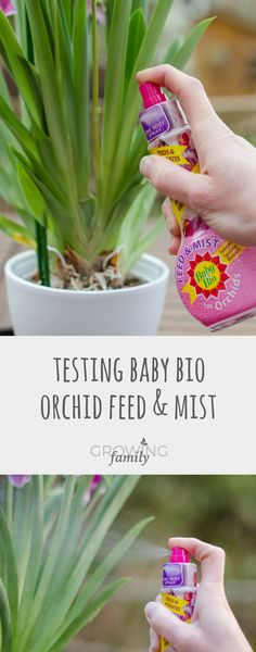 Which is the best Orchid Mist product? I put Baby Bio Orchid Feed & Mist to the test against competitor products to see which one delivers the ideal spray.