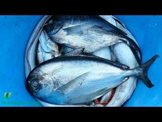 Omega 3s, Prostate Cancer, and Atrial Fibrillation | NutritionFacts.org