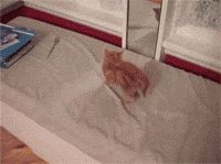 funnygifsenthusiast:  Kitty reacts to kitty in mirror More funny gifs @ funnygifsenthusiast.tumblr.com LOL