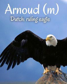 Dutch Names, Bald Eagle