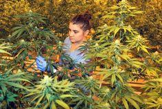 Savino to Trump: Don't hurt medical marijuana programs - SILive.com