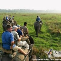 Elephant ride in Kaziranga NP by Markus Lilje