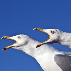British retiree Penny Freeman was stuck in her seaside house for four days during an intense seagull attack.