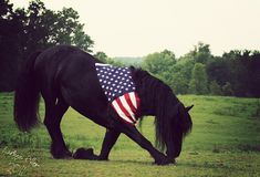 Friesian Horse - American Flag - Awesome