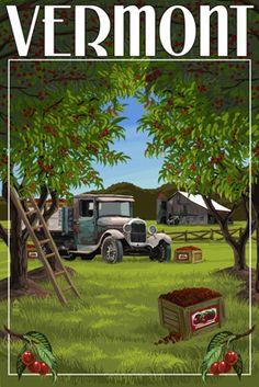 Vermont - Cherry Harvest - Lantern Press Poster