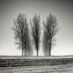 design-dautore.com: Tree Photography by Pierre Pellegrini