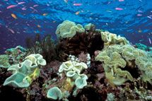 Featured Image Coral