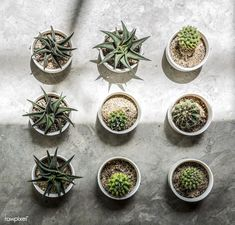 Small Cacti on the floor. Get this image for free at www.rawpixel.com