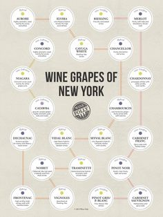 How well do you know your NY wine? The wine grapes of New York by Wine Folly Boot Camp, Wine Folly, Barolo Wine, Order Wine Online, Wine Education, Wine Reviews, Wine Deals, Vitis Vinifera, Wine Case