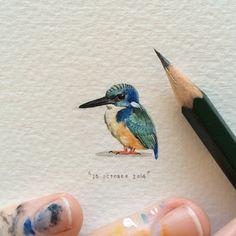 Day 298 : Alcedo semitorquata | half-collared kingfisher | blouvisvanger | isiXula. 20 x 19 mm. #365postcardsforants #wdc624 #miniature #watercolour #halfcollaredkingfisher #bird #capetown #lovecapetown