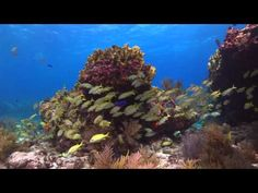 Watch amazing underwater wildlife in this Florida Keys video. #SCUBA #FloridaKeys #KeyWest