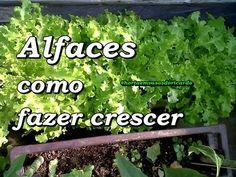 Como fazer alfaces crescer, compartilhe esta ideia SUPER l FÁCIL - YouTube