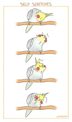 Repeat after me: I am a strong, independent bird…